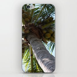 Coconut Palm iPhone Skin