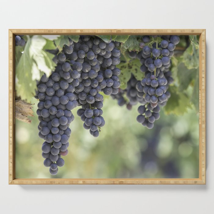 black grape grows on vineyard Serving Tray