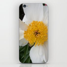 White Beauty by Teresa Thompson iPhone Skin