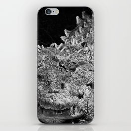 American cocodrile iPhone Skin