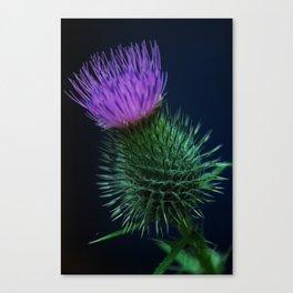 sweetly worn Canvas Print