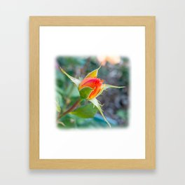 Rose Bud - Tea with Roses Framed Art Print