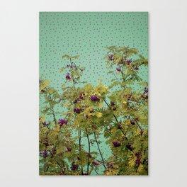 Rowan tree and purple polka dots Canvas Print