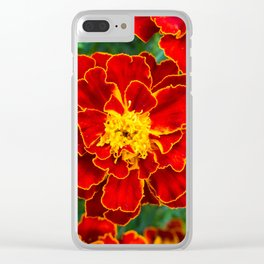 Red Tagetes lucida Clear iPhone Case
