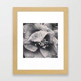 Rainy Day Flower Close Up Framed Art Print
