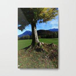 Alpine tree 2 Metal Print