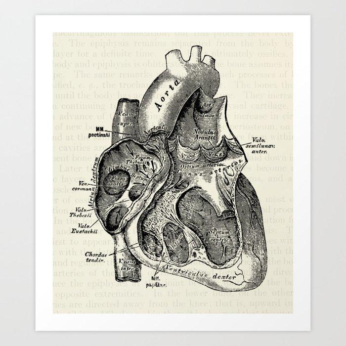 Vintage Anatomy Heart Medical Illustration Art Print by ...