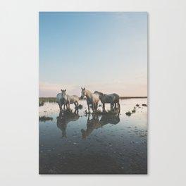 Camargue Horse II Canvas Print