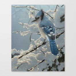 Blue Jay - On the Fence Canvas Print