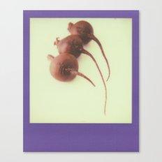 Purple Beets Canvas Print