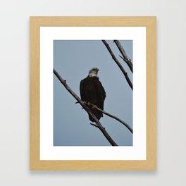 Spring Eagle Framed Art Print