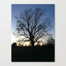 arkansas spring at sunset Canvas Print