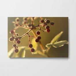 Berries shining Metal Print