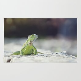 Green Iguana sunning on a stone wall Rug