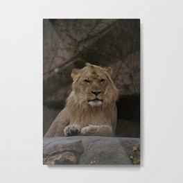 Lion! Metal Print