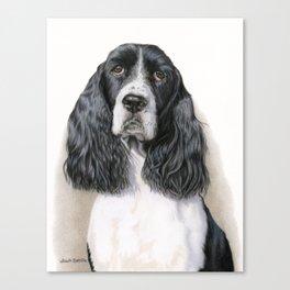 The Springer Spaniel Canvas Print