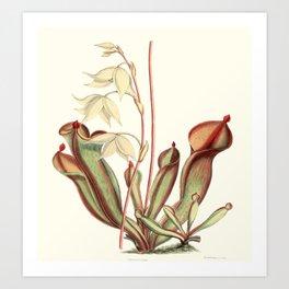 Heliamphora nutans Art Print