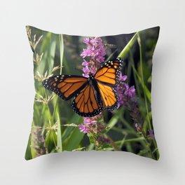 Monarch Splendor Throw Pillow
