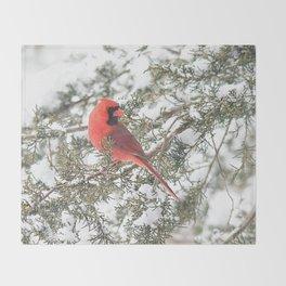 Cardinal on a Snowy Cedar Branch (sq) Throw Blanket