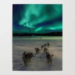 Winter Northern Lights Dog Sled (Color) Poster