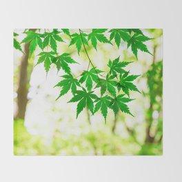 Green leaves of Japanese maple Throw Blanket