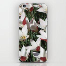 Tulips, Keukenhof, Amsterdam iPhone Skin