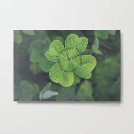 Four Leaf Clover - Plants Photography Metal Print