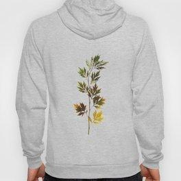 herbarium, natural Hoody