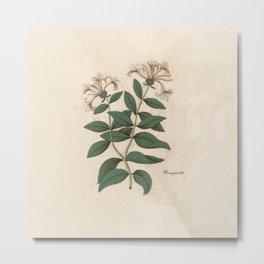 The Fragrant Honeysuckle Metal Print