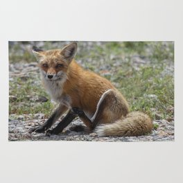 Itchy Fox Rug
