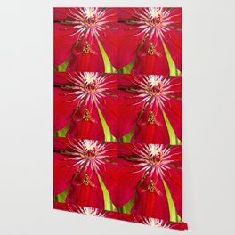Flowers & bugs RED PASSION FLOWER & HOVERFLY Wallpaper