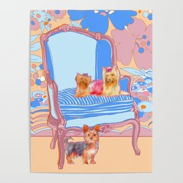 Dogs in Chairs : Yorkies Poster