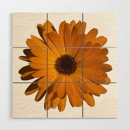 Orange power flower Wood Wall Art