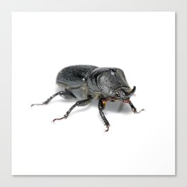 Ruggedly Rugose Stag Beetle Canvas Print