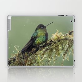 Fiery Throated Hummingbird perched in the Costa Rican Rainforest Laptop & iPad Skin
