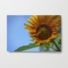 Sunfower Metal Print