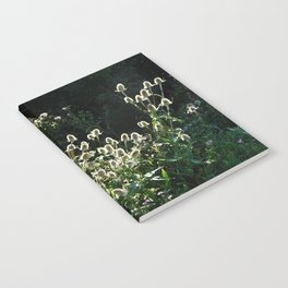 Teasels In The Wind Notebook