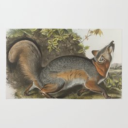 Vintage Illustration of a Grey Fox (1843) Rug