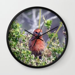 Handsome Male House Finch Wall Clock