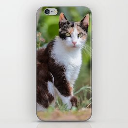 Are you meowing to me? iPhone Skin