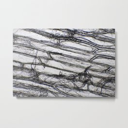 Wing of a Fly Metal Print