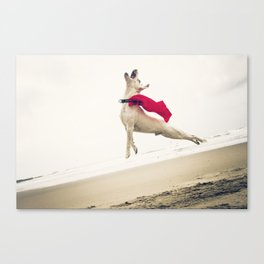 Jumping Jack Russell Terrier Canvas Print