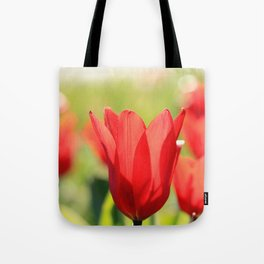 Red tulips in backlight Tote Bag