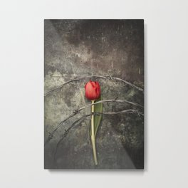 Tulip and barbed wire Metal Print