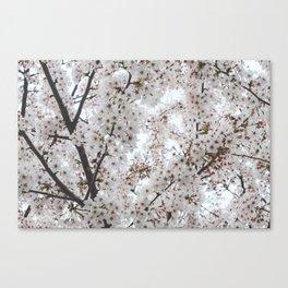 Sea of sakura. Canvas Print