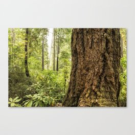 Been Around a Long Long Time Canvas Print