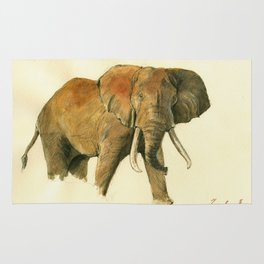 African elephant Rug