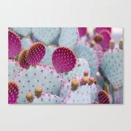 Santa Rita Prickly Pear Cactus Canvas Print