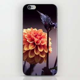 Treasure of Nature V iPhone Skin