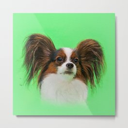 Papillon -Continental Toy Spaniel Metal Print